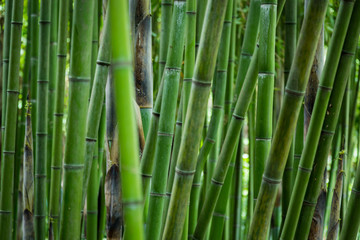 the bamboo forest © Davide