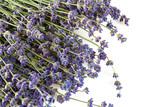 lavender flower isolated on white