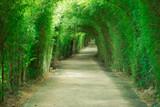 Walkway tunnel of green trees