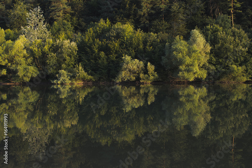 Forest lake with reflection