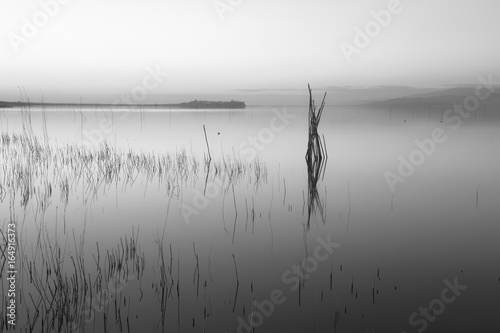 Wooden poles and canes reflecting on a lake, with perfectly still water - 164916373
