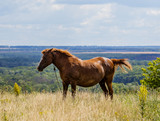 Domestic horse grazing in the meadow on a blue sky background.