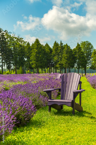 Chairs in the middle of a lavender flowers field