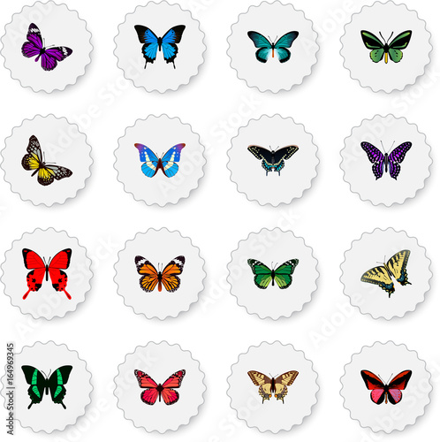 Realistic Sangaris, Birdwing, Morpho Hecuba And Other Vector Elements. Set Of Moth Realistic Symbols Also Includes Julia, Cynosura, Butterfly Objects.