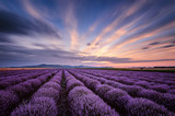 Before sunrise in lavender field