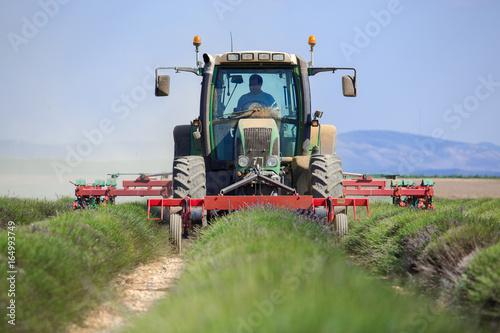 Foto op Canvas Lavendel Tractor with Farmer harvest field lavender