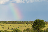 Rainbow Over The Savanna