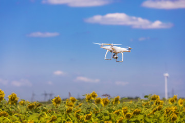 Drone hovering over sunflower field in summer day with blue sky and clouds.