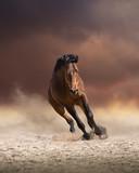 Koń brzegu biegnie naprzód na ciemne chmury i tło pyłu