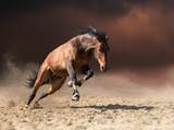 Koń skoki na ciemne chmury i tło pyłu