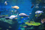Coral and fishes in aquarium tank.