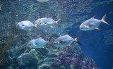 fishes in aquarium tank.