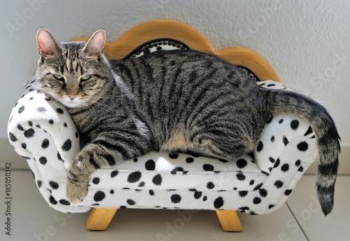 Zmęczony tygrys kot na sofie dalmatyńskiej