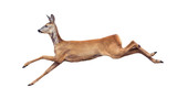 Jump of the Roe Deer isolated on white. - 165053309
