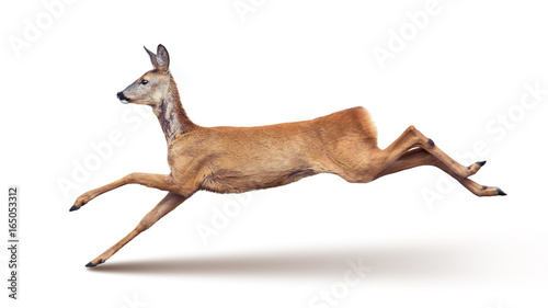 Aluminium Hert Jump of the Roe Deer (with shadow) isolated on white.