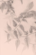 Artistic, floral background with delicate leaves in monochrome
