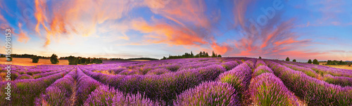 Fotobehang Lavendel Panorama of lavender field at sunset, France