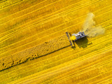Aerial view of combine harvester. Harvest of rapeseed field. Industrial background on agricultural theme. Biofuel production from above. Agriculture and environment in European Union.  - 165103332
