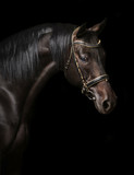 Portrait of a bay stallion - 165180993