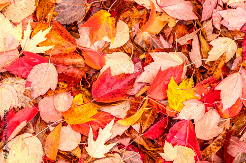 Fallen yellow and red autumn leaves