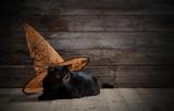 black cat in witch h...