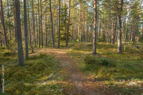 Path in forest in Finland