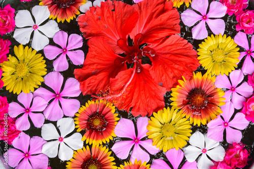 Fotobehang Plumeria 南国の花々