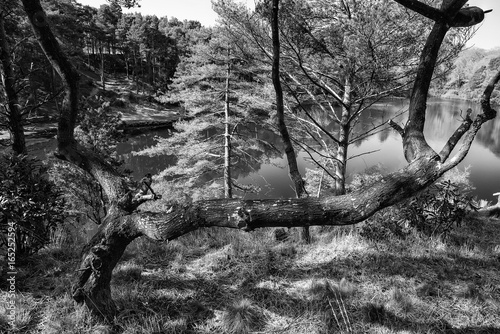 Beautiful landscape image of old clay pit quarry lake in black and white monochrome