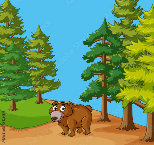 Foto op Aluminium Blauw Grizzly bear in the forest