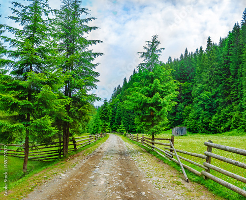 road in the spruce forest to climb the mountain