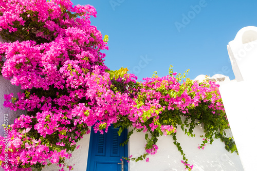 Foto op Plexiglas Roze White-blue architecture and pink flowers