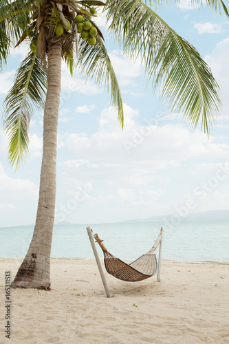 Fototapeta view of nice hummock with palms around in tropical environment