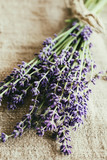Bundle of organic lavender flowers on sackcloth. Close up, rustic style, day light