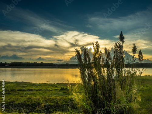 sunset at the river with grass flower
