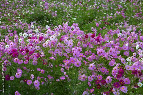Naklejka 가을을 상징하는 꽃