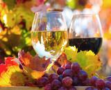 Genuss in der Pfalz: Weinprobe im Herbst, Rotwein, Weißwein, Weinglas und Trauben im Weinberg :) - 165404740