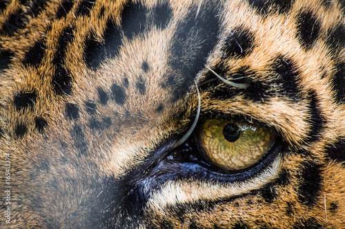 Eye of a leopard Poster