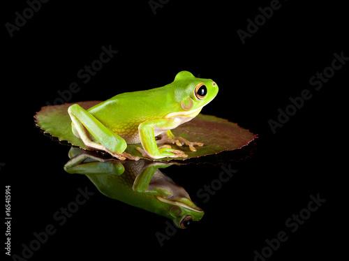 Frog sitting on leaf Poster
