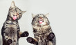 canvas print picture - Lustige, niedliche Katzen