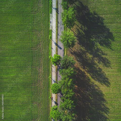 Foto op Canvas Weg in bos Droga w polu