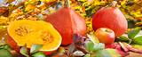 Herbst -  Kürbisse