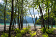 Beautiful place on Ritsa Lake in Relict National Park. Abkhazia. Green ferns, trees and view on water in mountain lake