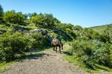 Horse walking on mountain road