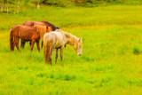 Horse on pasture.