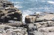 Waves crashing on Rocky Coastline, Acadia