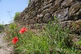 Mohnblumen an Rustikaler Steinmauer