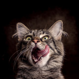 Hungrige Katze vor dunklem Hintergrund