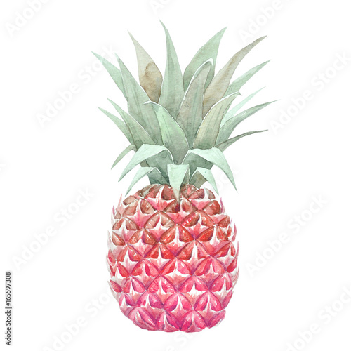 Watercolor pineapple fruit - 165597308