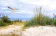 Leinwandbild Motiv Möwe über einem Strandübergang an der Ostesee