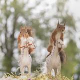 squirrels sitting on horses
